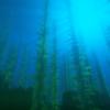 【マイクラ】水中の描画が魔強化されたSEUS開発版の新作『PTGI E8』が配信中